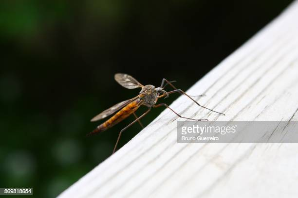 Close-up view of mosquito perching on fence