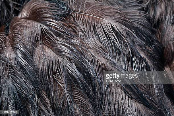 Close-up view of ostrich feathers