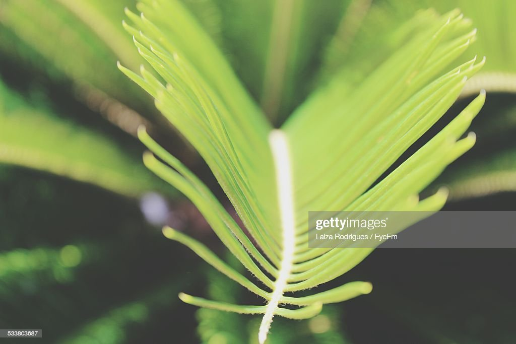 Close-Up View Of Plant : Foto stock