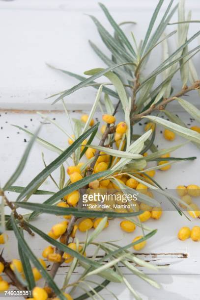 Close-up view of Sea Buckthorn berries
