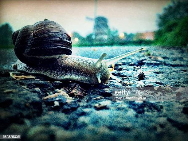 Close-Up View Of Snail On Stone