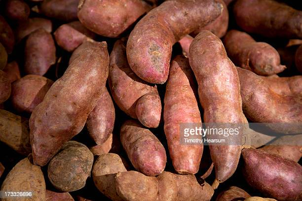 close-up view of sweet potatoes at roadside stand - timothy hearsum stock pictures, royalty-free photos & images