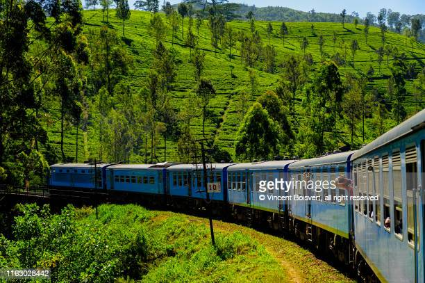 close-up view of the tea plantation train in haputale, sri lanka - tea crop stock pictures, royalty-free photos & images