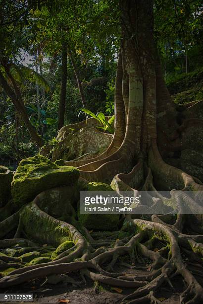 Close-up view of tree trunk with rippled roots