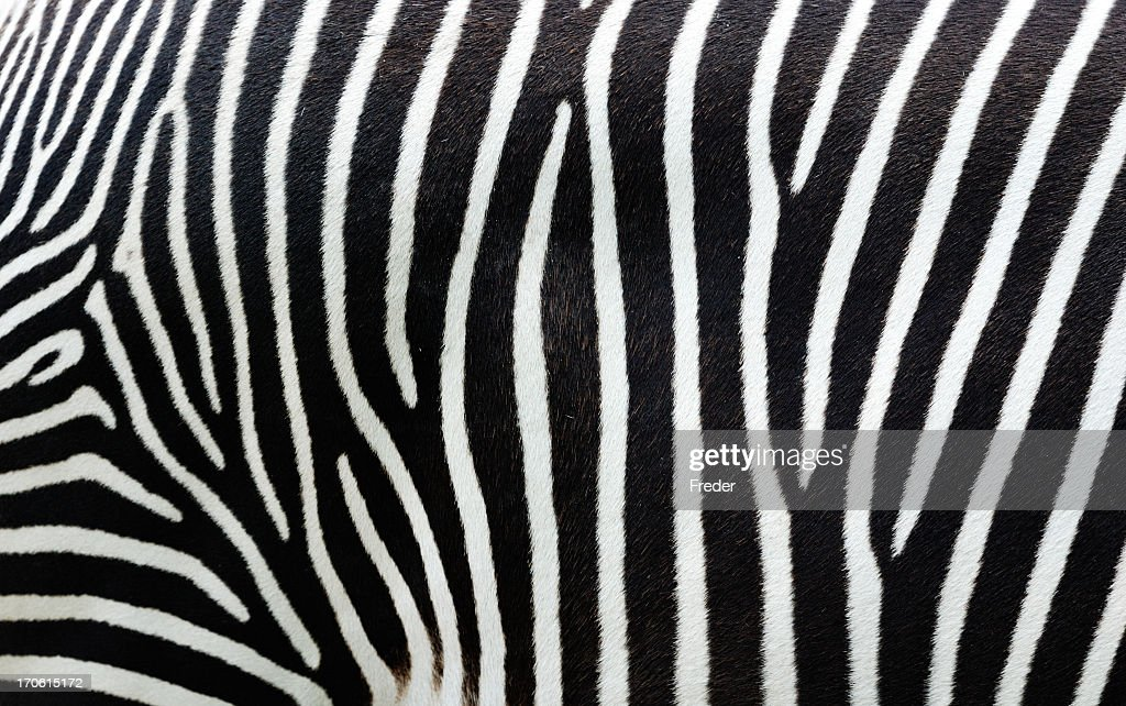 Close-up view of zebra stripes : Stock Photo