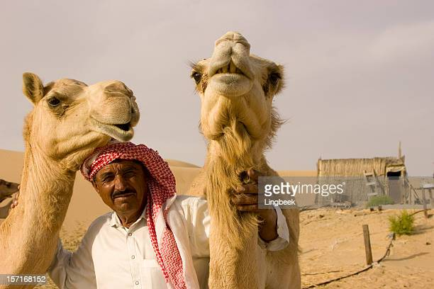 close-up wide-angle shot of  camel on a camelfarm - arabian peninsula stock pictures, royalty-free photos & images