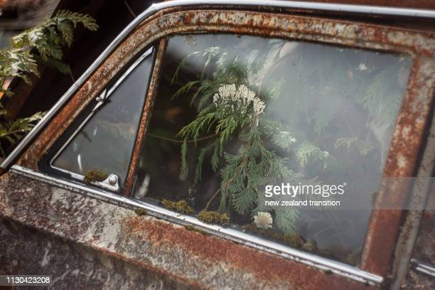 closeup window of a rusty car with moss and green leaves - abbandonato foto e immagini stock