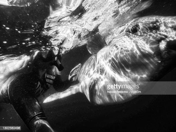 close-up woman with fish swimming in sea - mola stock pictures, royalty-free photos & images