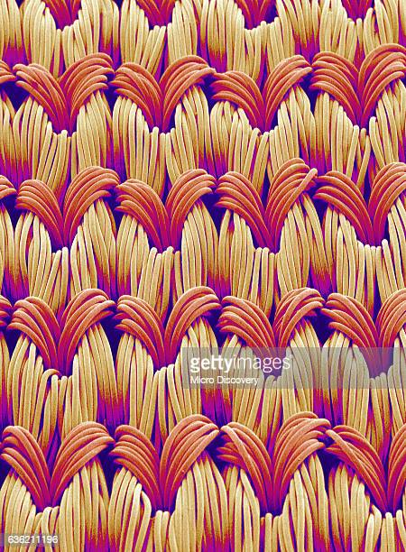 cloth of women's underwear - magnification stock pictures, royalty-free photos & images