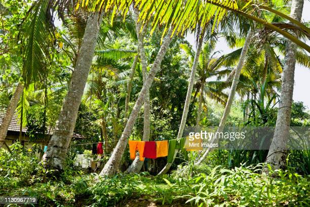 clothes drying in a jungle - kochi india stock pictures, royalty-free photos & images