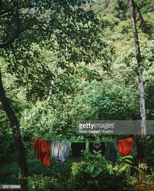 Clothes Drying On Clothesline Amidst Trees