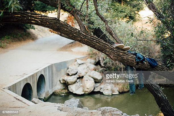 Clothes on tree trunk by river, Malibu Canyon, California, USA