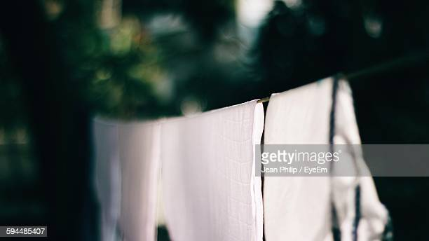 Cloths Hanging Against Tree