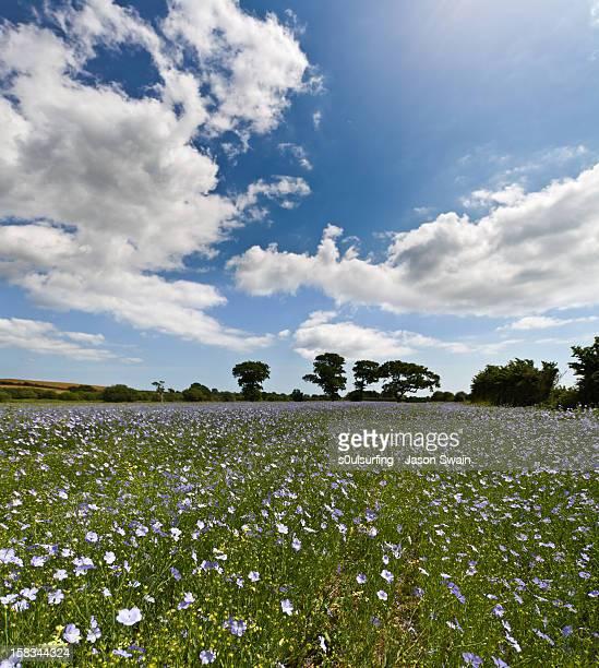 cloud farming - s0ulsurfing imagens e fotografias de stock