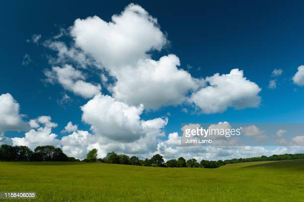 cloud, field and blue-sky background. - weather stock pictures, royalty-free photos & images