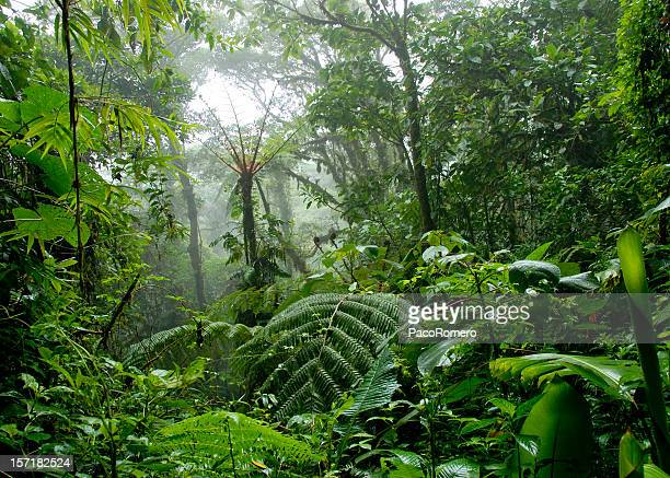 cloud forest in costa rica - tropical rainforest stock pictures, royalty-free photos & images