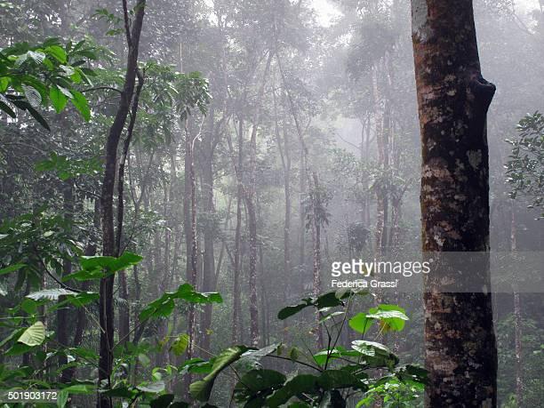 Cloud Forest, Mahe Island, Seychelles