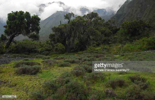 cloud forest on the high slopes of mount meru - mount meru stock photos and pictures