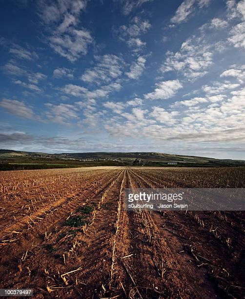 cloud harvest - s0ulsurfing 個照片及圖片檔