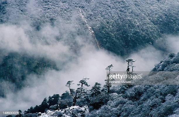 Cloud rising out of valley below Dzongri after snowfall.