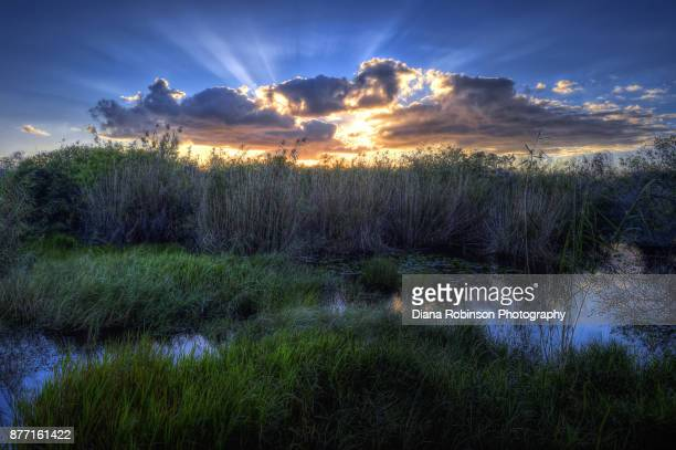 cloud typologies sunrise near the anhinga trail, everglades national park, florida - anhinga_trail photos et images de collection