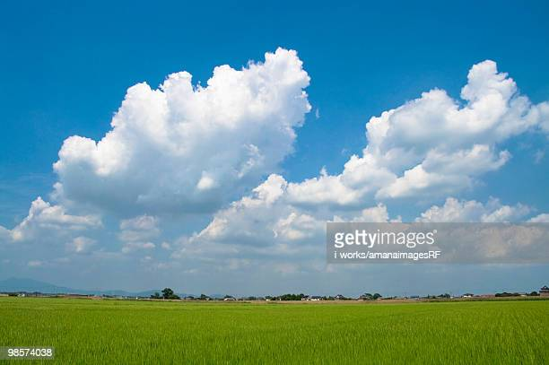 Clouds above rice paddy, Chikusei, Ibaraki Prefecture, Japan