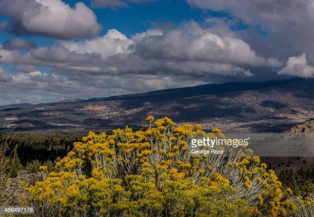 Clouds and rabbit brush are viewed along Highway 97 on September 27 in Weed California With 2013 the driest year in recorded history and reservoir...