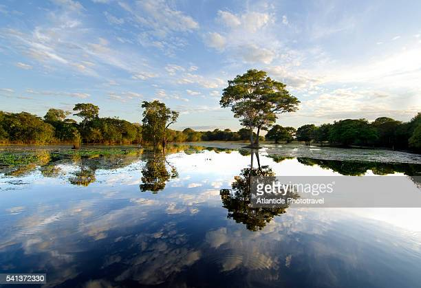 clouds and trees reflecting on waters of mutum river - pantanal stockfoto's en -beelden