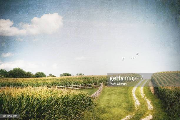 clouds drifting over corn farm in late summer. - westminster maryland stock pictures, royalty-free photos & images