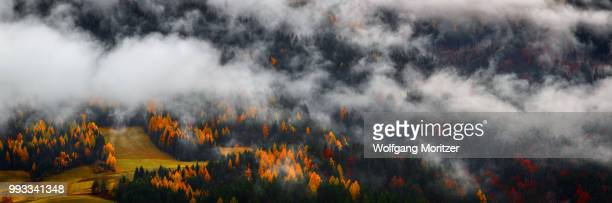 Clouds hovering low over an Autumn forest.