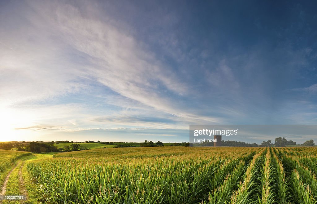 Clouds over Corn : Stock Photo