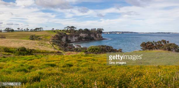 clouds over grassy coastal cliffs, new zealand - image stock pictures, royalty-free photos & images