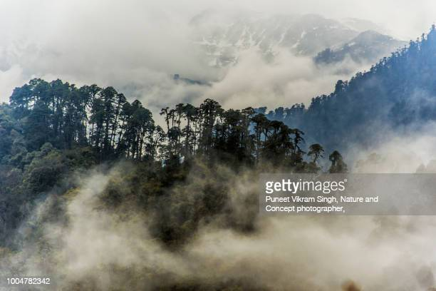 clouds over the trees in the backdrop of snow capped mountains - wildreservaat stockfoto's en -beelden