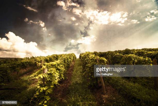 clouds over vineyard at sunset, keuka lake, new york state, usa - finger lakes stock pictures, royalty-free photos & images
