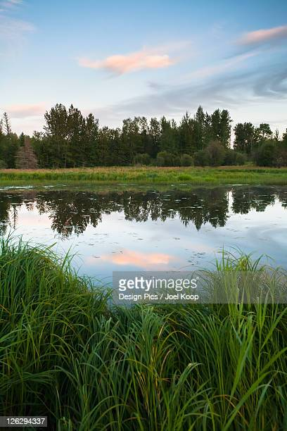 clouds reflected in a pond at sunset - sumpf stock-fotos und bilder