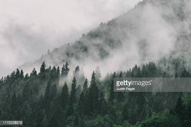 clouds sitting in alpine trees - mist stockfoto's en -beelden