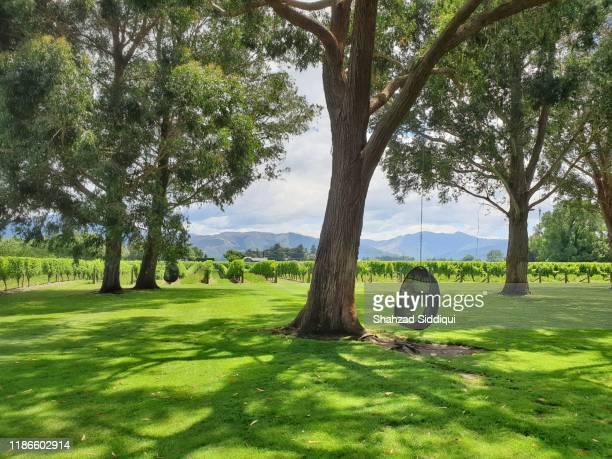 cloudy bay vineyard- marlborough region, new zealand - blenheim new zealand stock pictures, royalty-free photos & images
