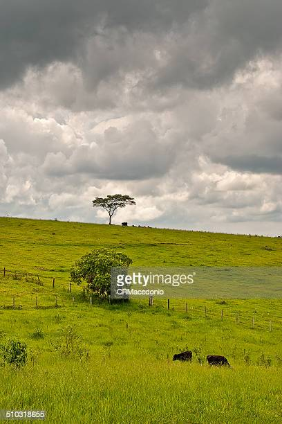 cloudy day on farm - crmacedonio stockfoto's en -beelden