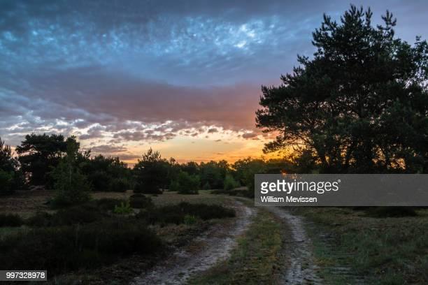 cloudy sunrise path - william mevissen bildbanksfoton och bilder