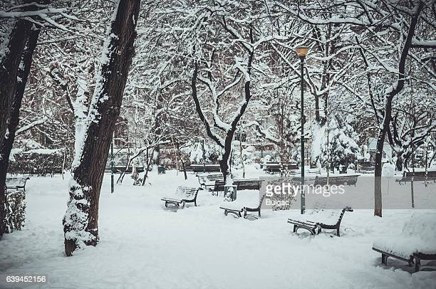 Cloudy Winter Day in The Park