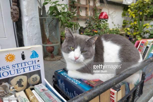 clovelly village cat resting on second hand books, north devon, england - mamífero con garras fotografías e imágenes de stock