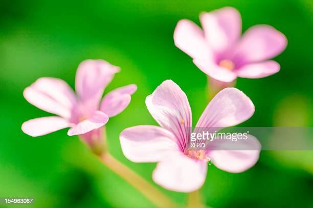 klee und blumen im frühling - 4 leaf clover stock-fotos und bilder