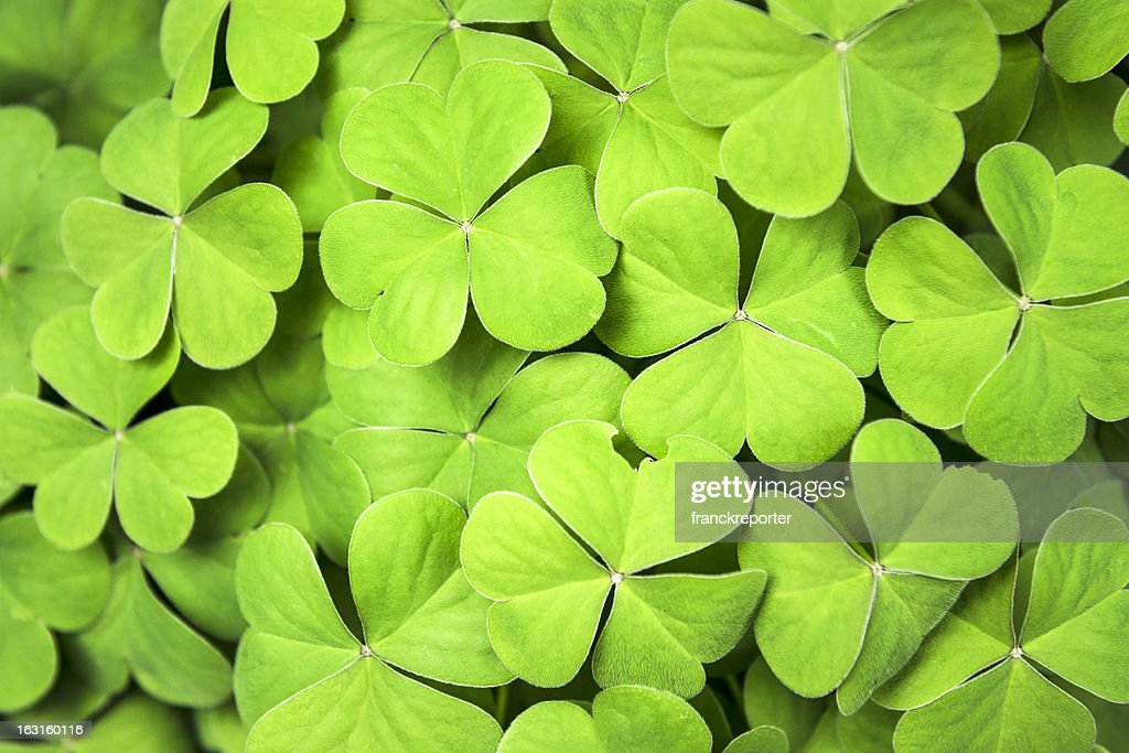 Clover background for St. Patrick day : Stock Photo