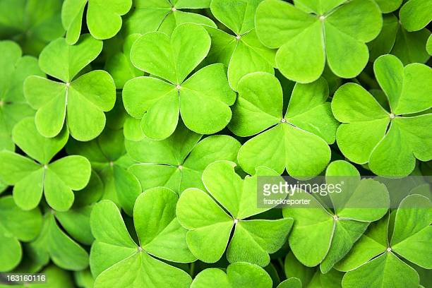 Clover background for St. Patrick day
