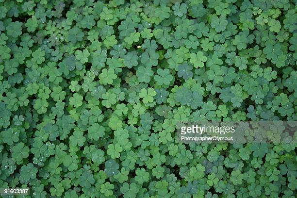 clover background - chlorophyll stock pictures, royalty-free photos & images