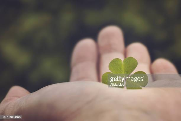 clover - wishful skin stock pictures, royalty-free photos & images