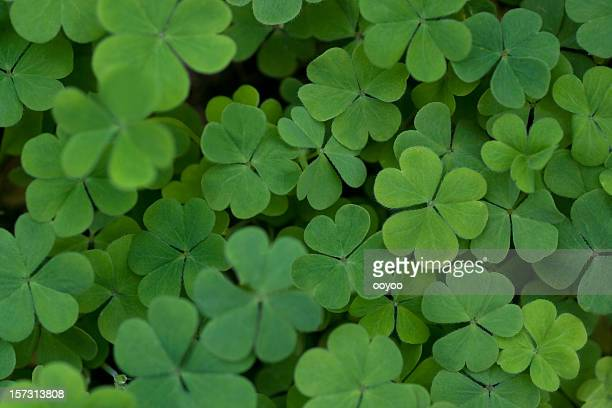 clover - st patricks background stock pictures, royalty-free photos & images