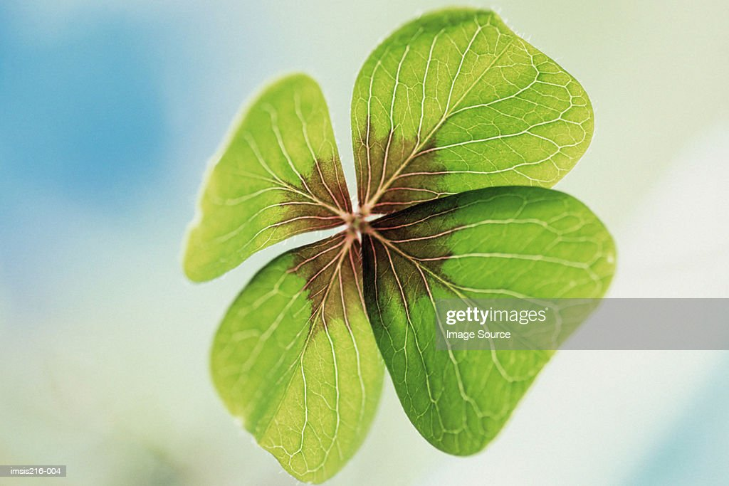 Clover : Stock Photo