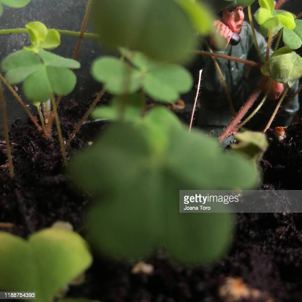 clover plant  -conceptual nature - joana toro stock pictures, royalty-free photos & images