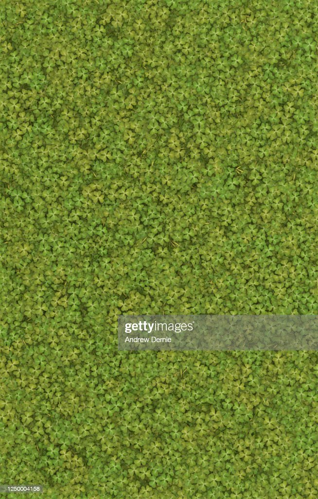 Clover viewed from above 3D render : Stock Photo